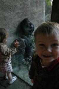 Koen and the gorillas