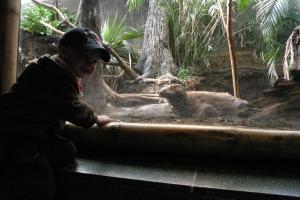 Komodo Dragon - Koen enjoyed watching their long tongues!